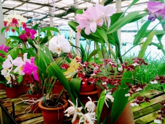 Chocolate & Orchids Funchal City Tour