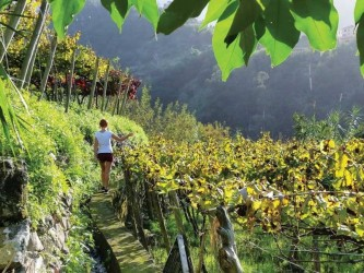 Madeira Wine One Day Tour