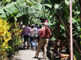 Tropical Madeira Cultural Tour