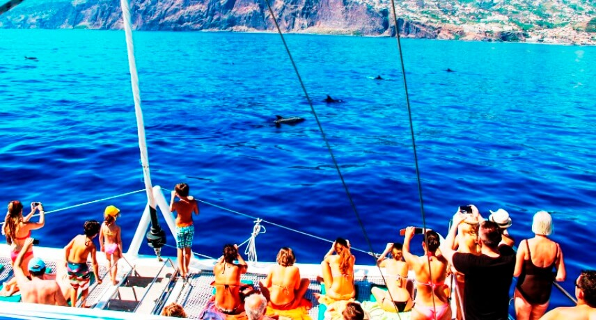 10-Local-Things-to-do-in-Funcal-Dolphin-and-Whale-watching-in-Madeira