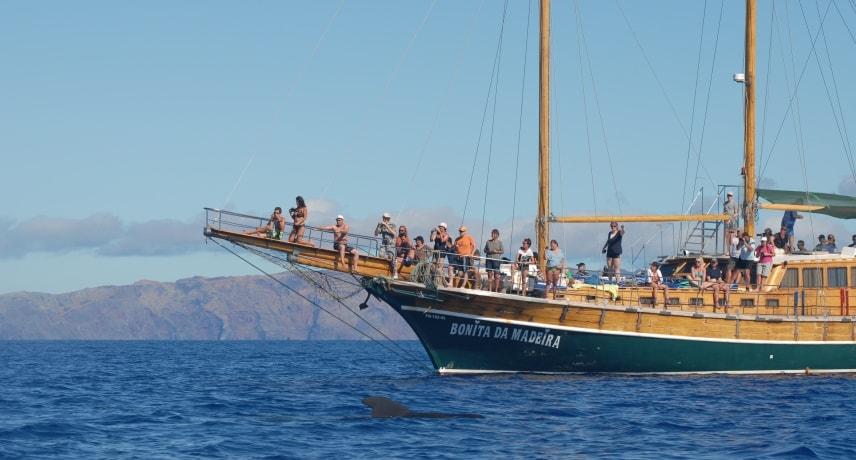 Остров Мадейра: Лодочные туры