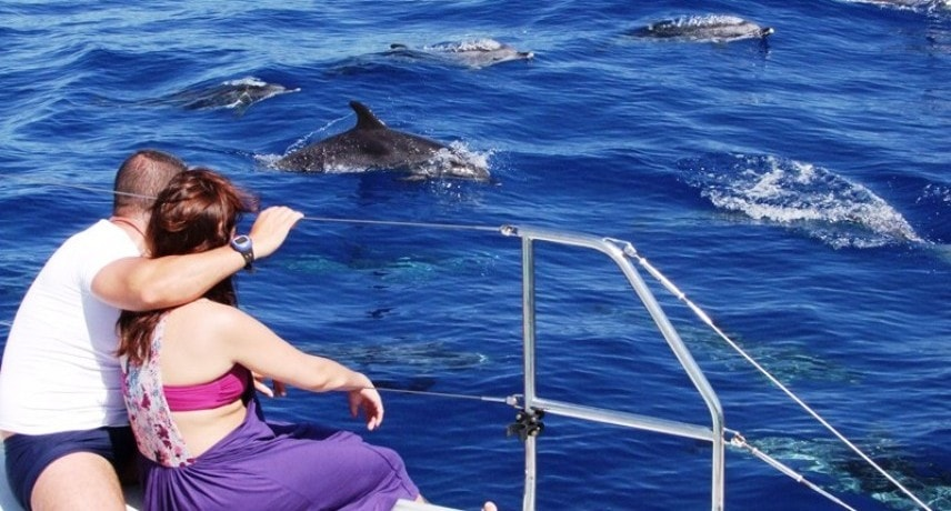 5. Dolphin and Whale watching in Madeira Island