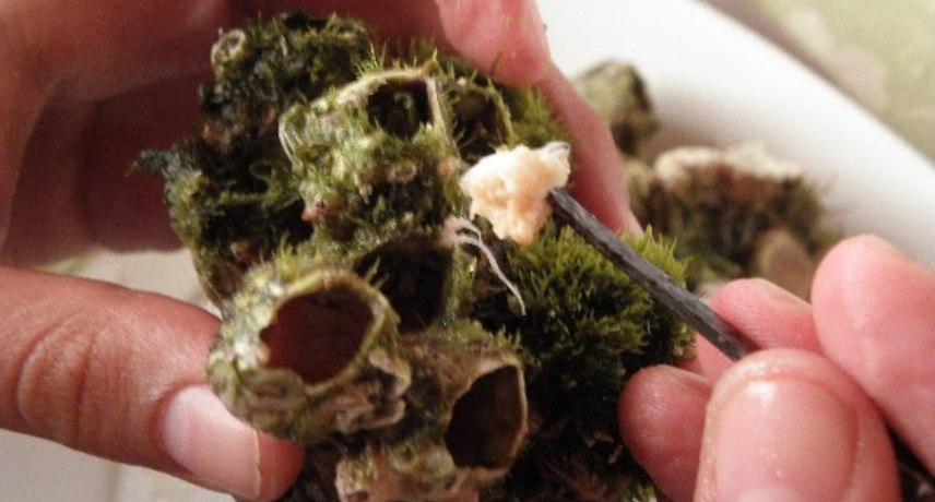 cracas - 17 plats que vous devez absolument essayer pendant vos vacances sur l'île de Madère