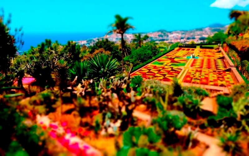 Ботанический сад Мадейры - Посещение Мадейры в апреле - Пасхальные каникулы (1)