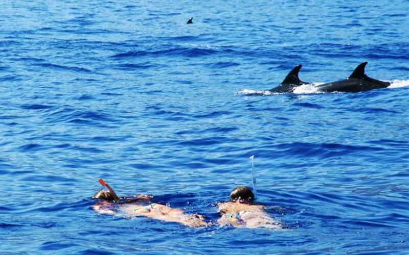 Плавание с дельфинами - Посещение Мадейры в апреле - Пасхальные каникулы
